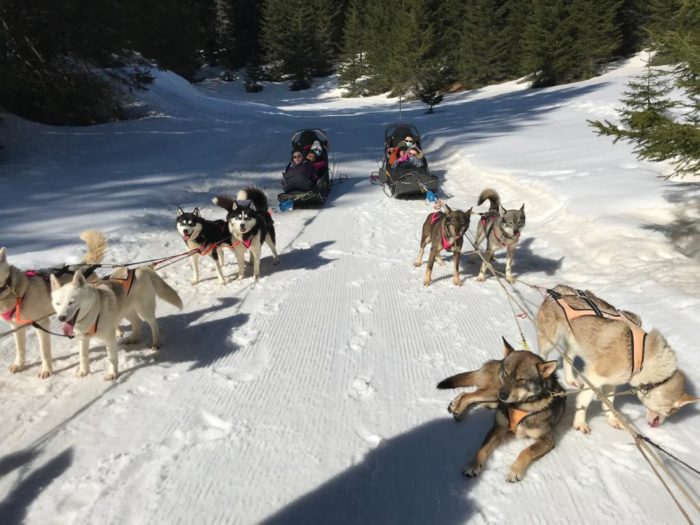 Une sortie chiens de traineaux pour participer aux km du coeur de Zicomatic !